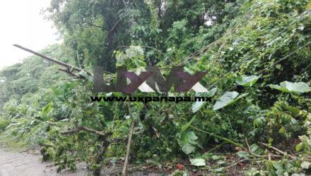 Arboles ocasionan el problema de la energía eléctrica en Uxpanapa